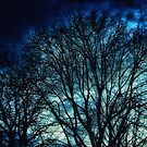 Leaded Light Autumn Trees by afinearticle
