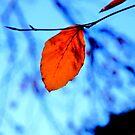 Autumn Blues by Nik Watt