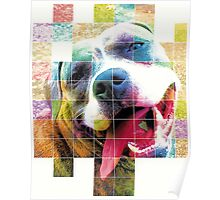 Layla - American Staffordashire Terrier Pit Bull Poster