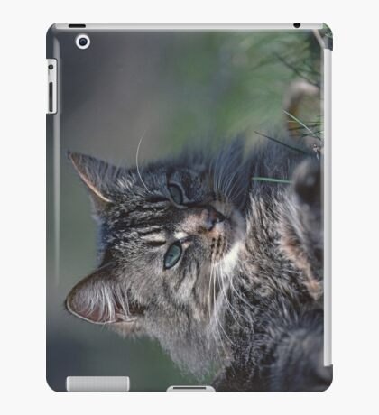 """Chat - Cat  """" Tchink boom"""" 01 (c)(t) ) by Olao-Olavia / Okaio Créations 300mm  f.2.8 canon eos 5  1989 iPad Case/Skin"""