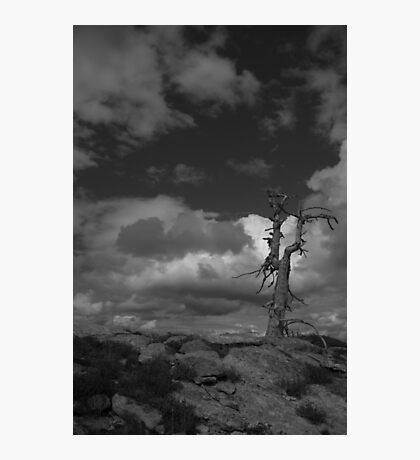 Ansel Adams Style Black & White Tree  Photographic Print