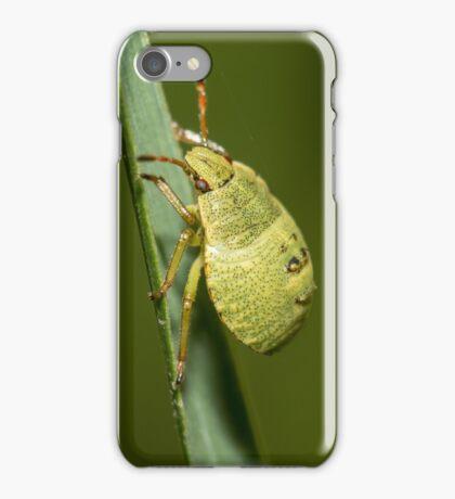 Common Green Shieldbug iPhone Case/Skin