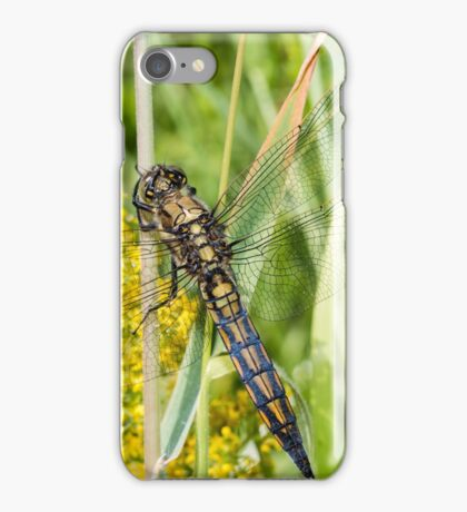 Black-tailed Skimmer iPhone Case/Skin