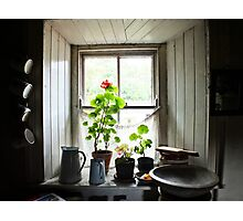 Still Life with Geraniums II Photographic Print