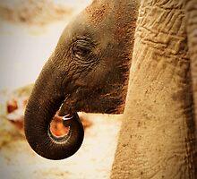 O my friend Ganesha by Ikramul Fasih
