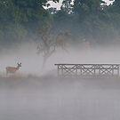 Misty Morning by Kasia Nowak