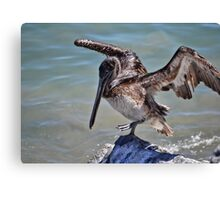 Pelican Practicing the Crane Pose from the Karate Kid  Canvas Print