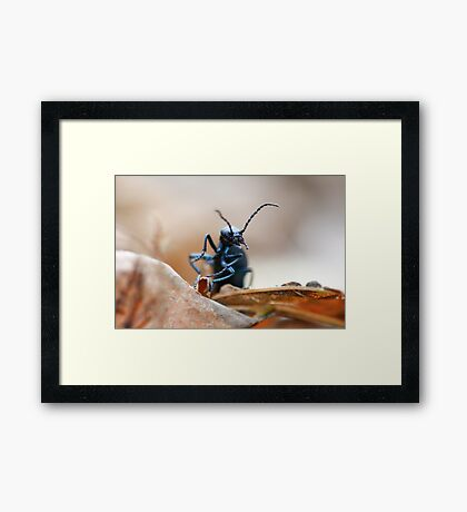Black Beetle 2 Framed Print