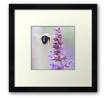 Purple And Bumble 2 Framed Print