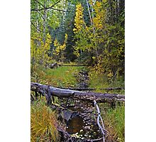 Touch Of Autumn Photographic Print