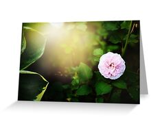 Nature background with flower of rose Greeting Card