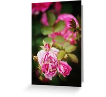 Nature background with rose flower Greeting Card