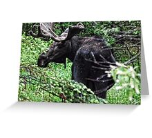 Bull Moose Algonquin Greeting Card