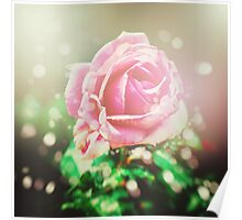 Nature background with rose flower Poster