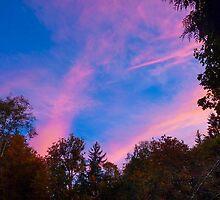 Sunset in a Rainforest by SusanHamilton