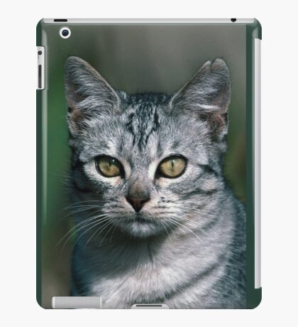 """Chat - Cat """" Peluche """" 02 (c)(h) ) by Olao-Olavia / Okaio Créations 300mm f.2.8 canon eos 5 1989  iPad Case/Skin"""