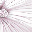 Lavatera Flower Stamen Macro  by Sandra Foster