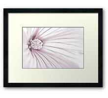 Lavatera Flower Stamen Macro  Framed Print