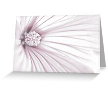 Lavatera Flower Stamen Macro  Greeting Card