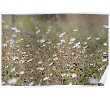 Meadow Blossoms Poster