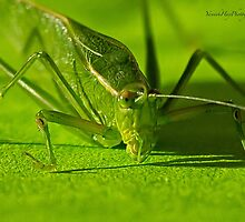 Grasshopper by Yannik Hay
