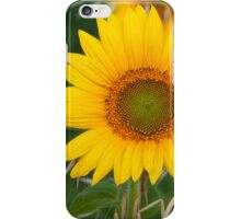 The live of the sunflowers 2 iPhone Case/Skin