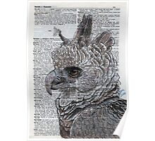 Harpy Eagle on Dictionary Paper Poster