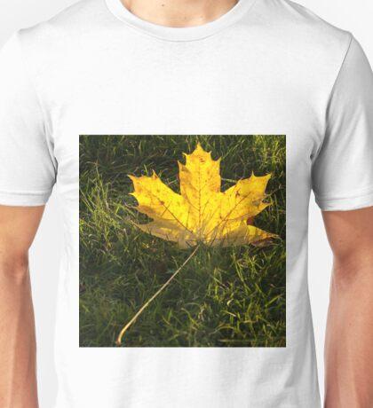 A fallen maple leaf in the sun Unisex T-Shirt