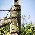 Country Birdhouse by Angela E.L. Clements