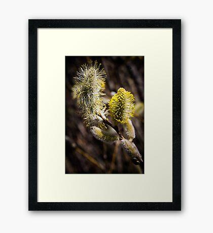 Furry Flower  Framed Print