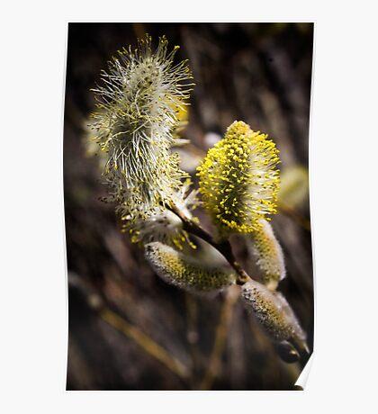 Furry Flower  Poster