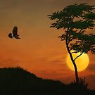 A Hawk In The Sunset by TOM YORK