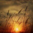 Following The Sun by TOM YORK