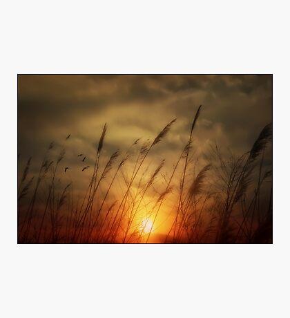 Following The Sun Photographic Print