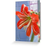 Tania's Happy Hippy plants - Hippeastrum Greeting Card