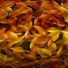 Fallen Leaves by TOM YORK