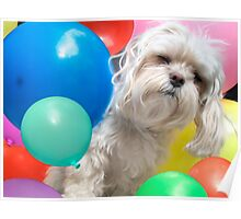 Attack of the Killer Balloons - Fun Maltese Dog Portrait Poster