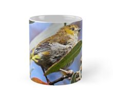 Forty-spotted Pardalote ~ rare and endangered  Mug