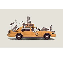 1-800-TAXI-DERMY Photographic Print