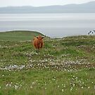 Islay Coo by Kat Simmons
