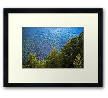 Wall of Trees Framed Print