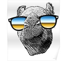 Who Needs to Know! Hipster Camel Hump Day Poster