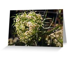 Furled Queen Anne's Lace Greeting Card