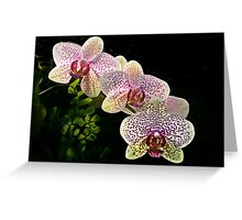 Spotted orchids Greeting Card
