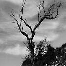 Tree. by Paul Pasco