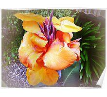 Orange Canna - my garden Poster