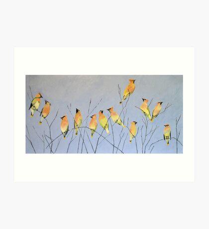 Cedar Waxwings in Winter Art Print