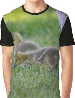 Branta Canadensis - Gosling | Beacon, New York Graphic T-Shirt