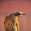 Doofus Bird by carol brandt