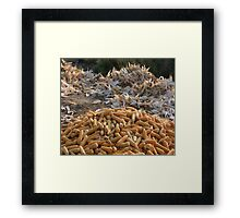 Sweet Corn and Husks Framed Print